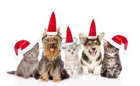 5 Tips to Truly Enjoy the Holiday Season